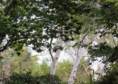 Arbres , arboretum de huelgoat