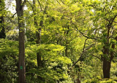 Arbres au printemps , jardin botanique de Nantes