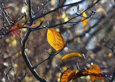 Les dernières feuilles - arbres en hiver