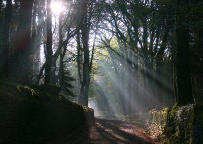 Rayons de soleil dans la forêt