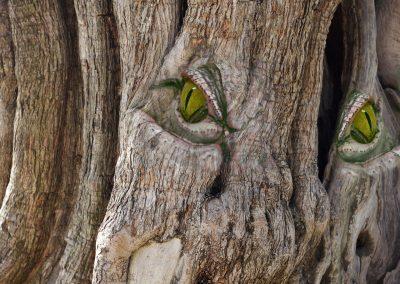 Arbre aux yeux verts