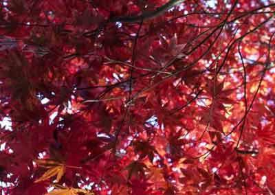 automne-01