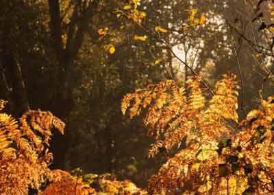 automne-05