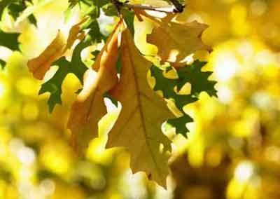 automne-07