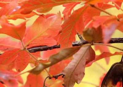 automne-08