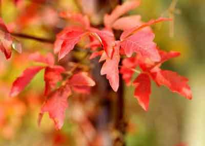 automne-09