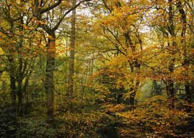 automne-12