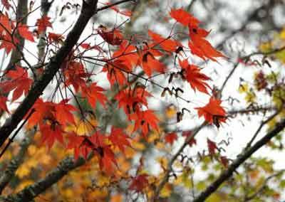 automne-14