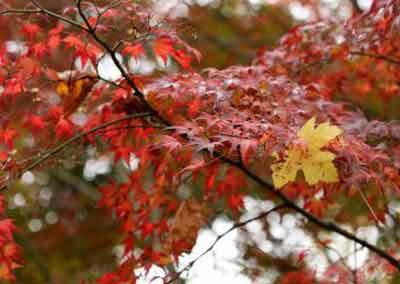 automne-16