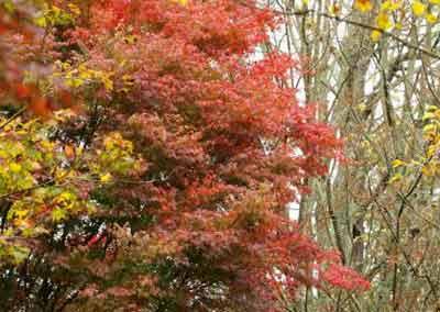 automne-17