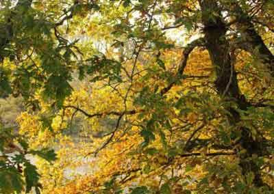 automne-20