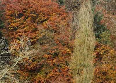 automne-21