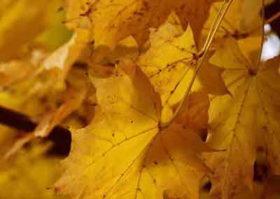 automne-22