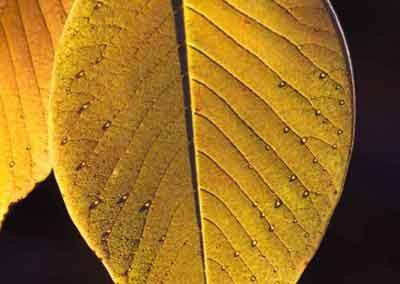 automne-28