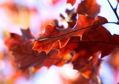automne-29