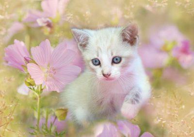 Chaton dans les fleurs