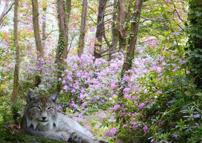 Forêt de rhodos